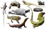 Reptile – English Flashcard for Reptile for IELTS